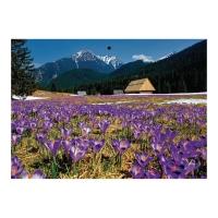 Kalendarz trójdzielny Crux, wypukły, pory roku