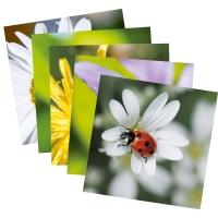 Doppelkarte Art Bula 947, neutral, 122x122 mm, 5 Motive, Packung à 5 Stück