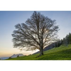 Doppelkarte Art Bula , 122x175 mm, Baum, Blanko