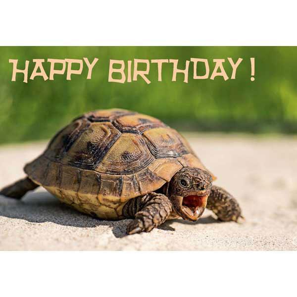 Greeting Card Happy Birthday Turtle 122x175mm 7713